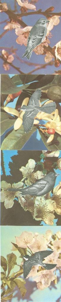 oiseaux floraux