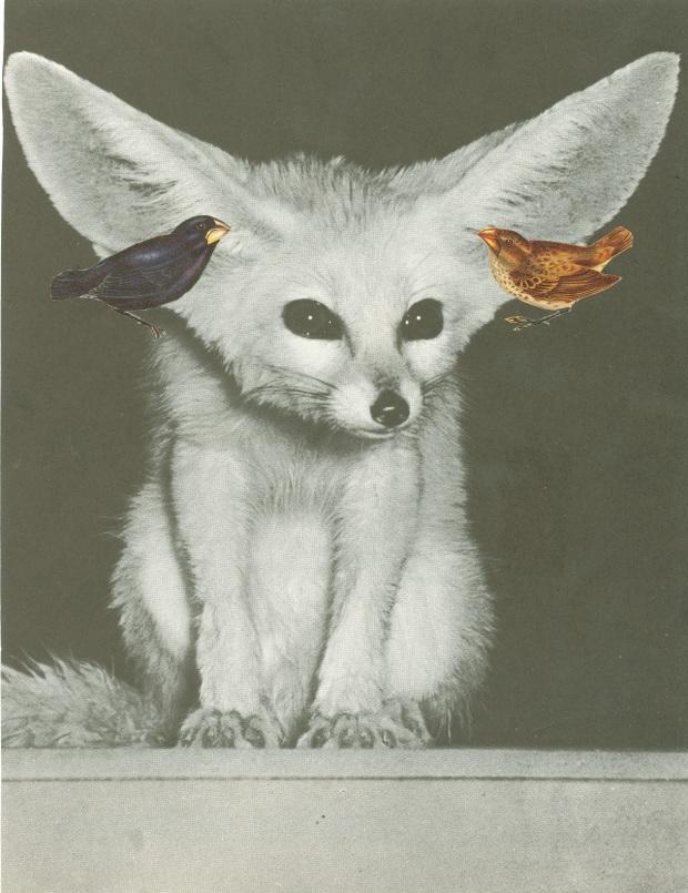 les oreilles qui sillent